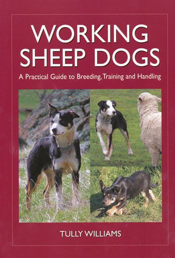 Working Sheep Dogs Tully Williams