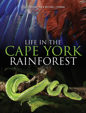 Life in The Cape York Rainforests